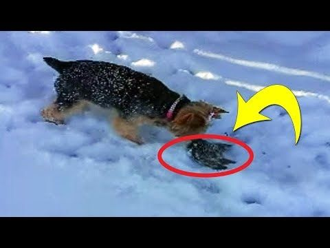 This Dog Found A Tiny Animal Frozen In The Snow Then Her Owner