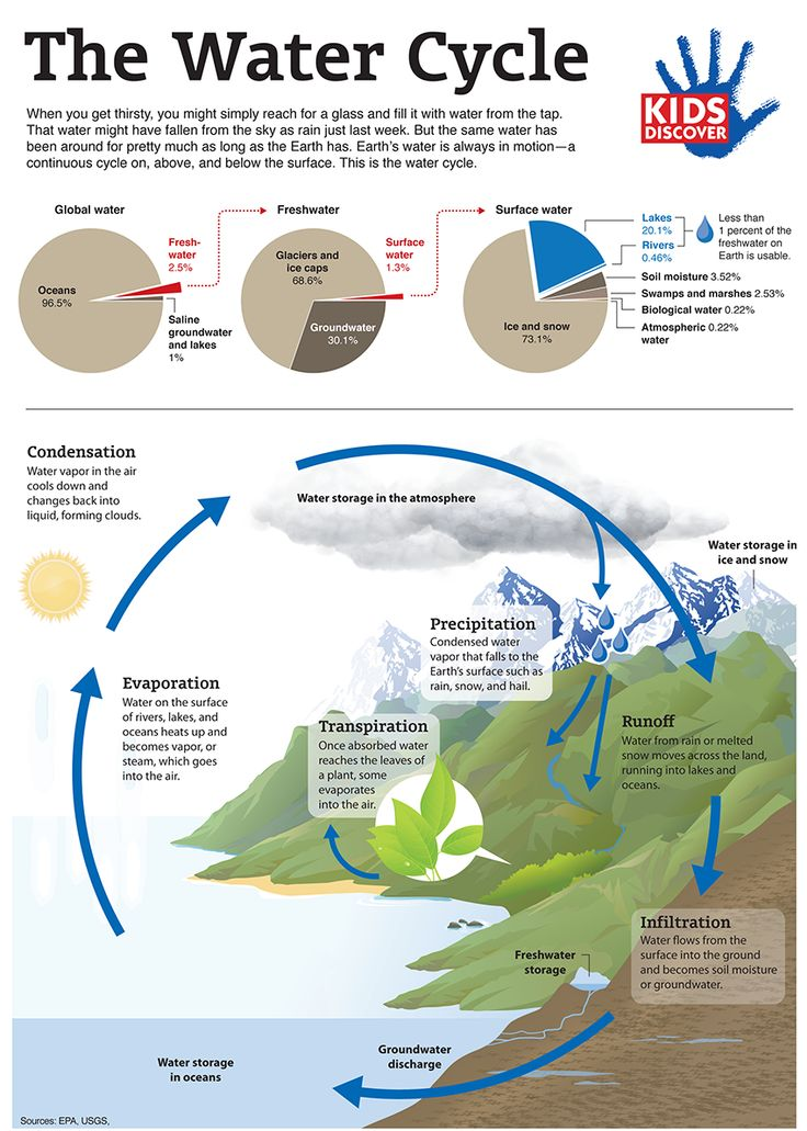 77 best waterwater cycle images on pinterest teaching science this downloadable infographic details the water cycle for kids by explaining the path water travels from ccuart Choice Image