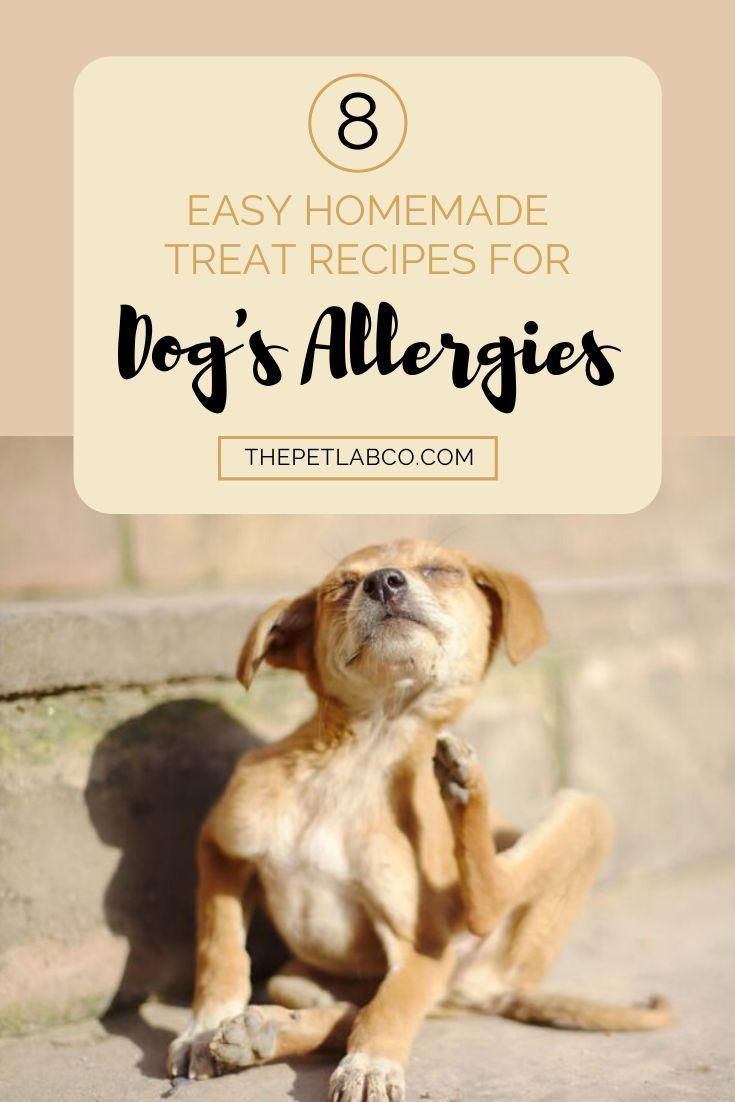 Pin On Dog Food And Treats