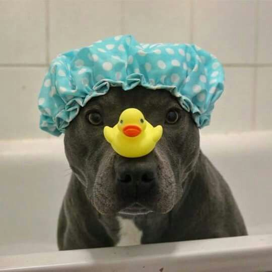 Bath time with my rubber ducky.