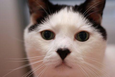 cat vision vs human vision