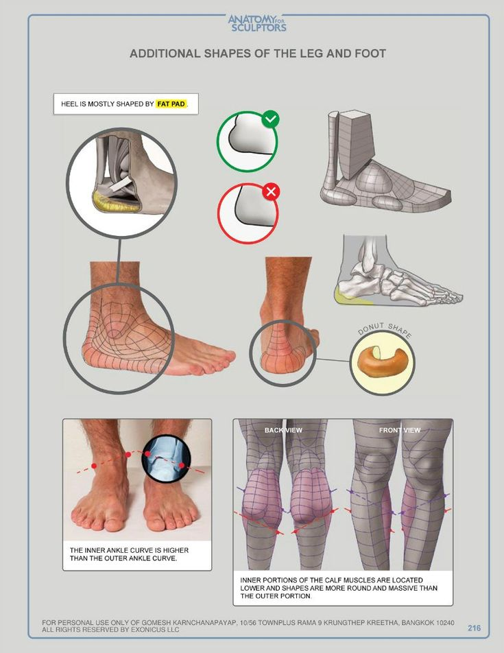 38 best feet images on Pinterest | Anatomy reference, Human anatomy ...