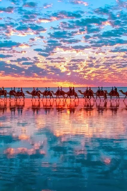 Sunset with camels