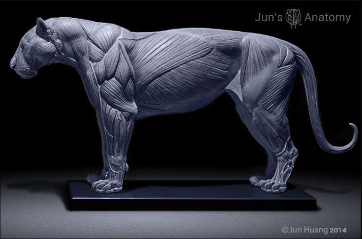 큰 고양이 해부학 모델, 사자, 호랑이, 세이버 - 치아 - CGFeedback