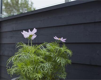 PLUS plank profilhegn har mange muligheder, du bestemmer selv højde og bredde på hegnet. På billedet ses hegnet i trykimprægneret grundmalet dækkende sort.