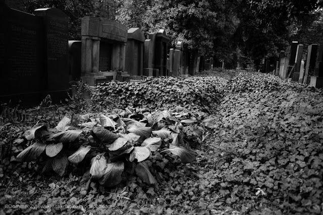 tak na oko...: Praga cz. 6 - Nový židovský hřbitov