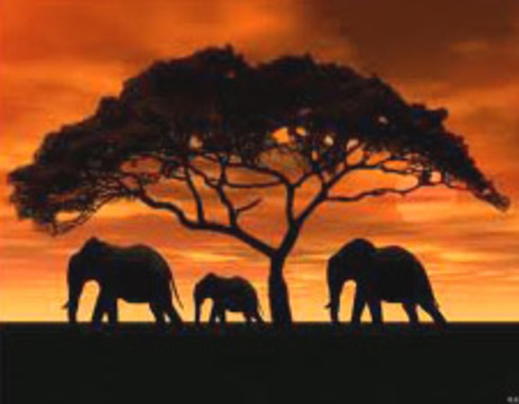 beautiful africaelephant silhouette sunsets and