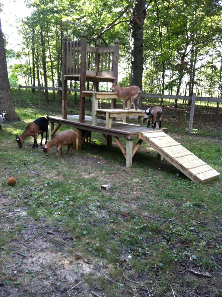 The Jungle Jim play ground for all the pigmy goats at Wildwood.   Built by Denny White
