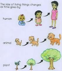 All living things grow. In the picture we see how plants, animals and humans grow.