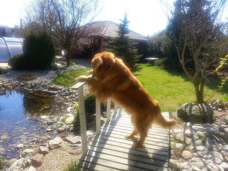 Sunny in the garden.