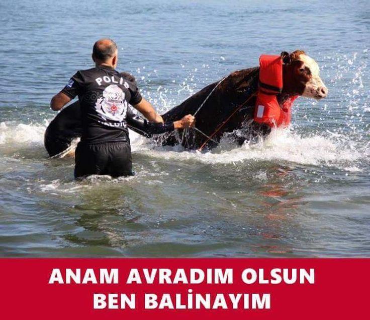 Anam avradım olsun ben balinayım. #karikatür #mizah #matrak #komik #espri #şaka #gırgır #komiksözler #caps #bayram #kurban #kurbanbayramı