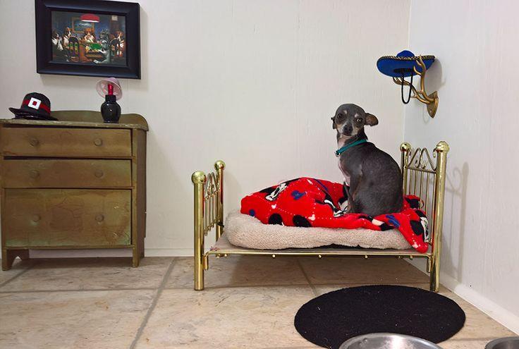 Esta Mulher Construiu Um Quarto Para Seu Cão Sob As Escadas E Os Detalhes São Impressionantes