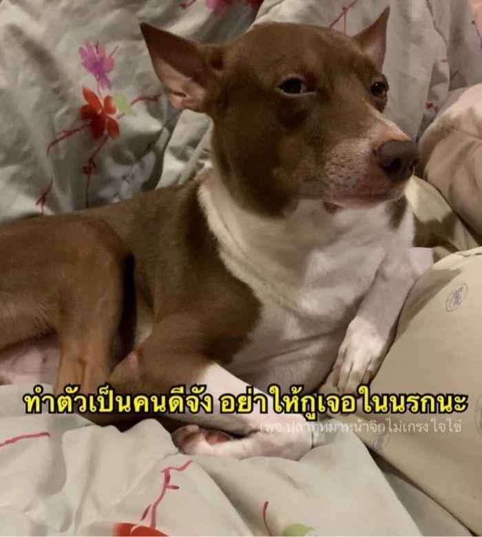 ป กพ นโดย M ใน ม มภาษาไทย ม มตลกๆ ภาพหมาขำข น ร ปตลก
