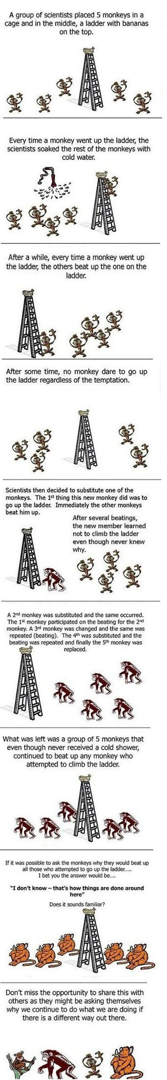 The Curious Monkey Experiment   ( people need to stop and think )
