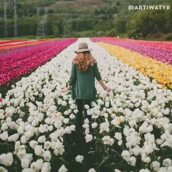 Watch this travel video to learn how tulip season in Holland and where you should go to experience all the beauty.