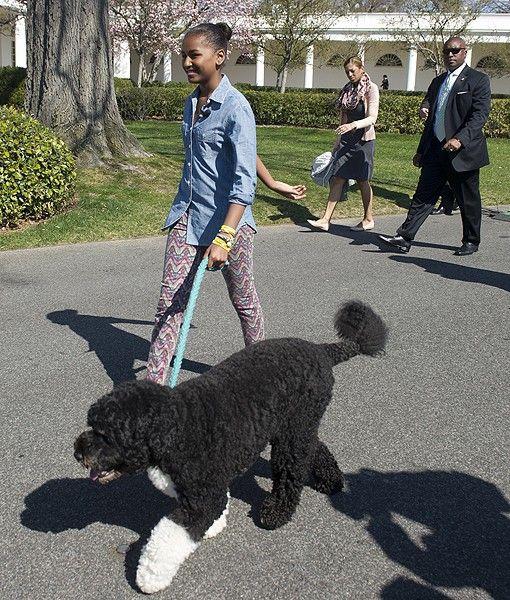 Sasha Obama and Bo #dog #celebrities   http://www.petrashop.com/