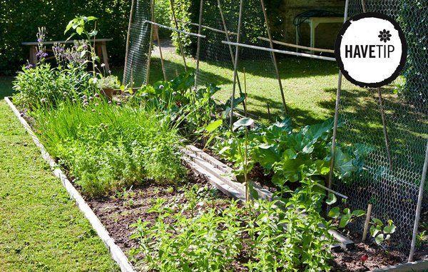 Dét skal du gøre i haven efter sommerferien