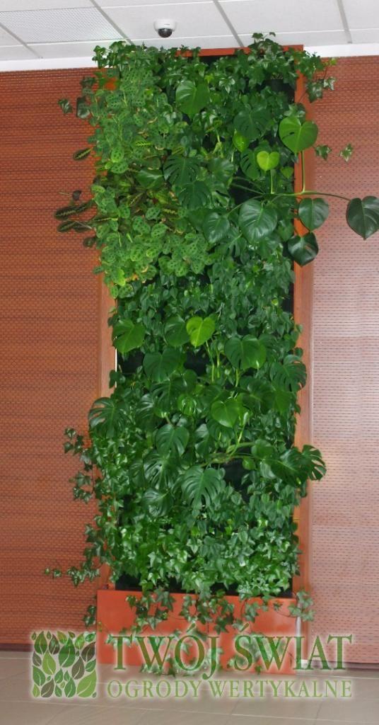 #verticalgarden #zielonesciany #plantsonwall