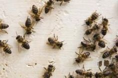 How to Get Rid of Bees in the Backyard (11 Steps) | eHow