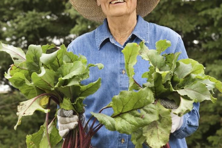Potasio en los nabos . Los nabos son vegetales de raíz, por lo general blancos con un tono púrpura en la parte superior cerca de las hojas que sobresalen del suelo. Este vegetal sustancioso se puede comer crudo como un bocadillo crujiente o cocido en varias formas para servir como una guarnición ...