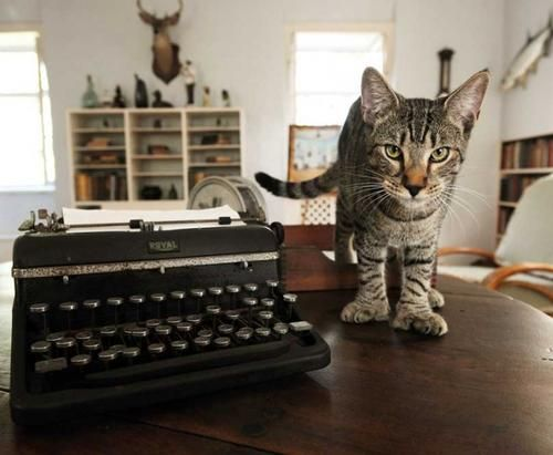At Hemingway's House, Tourists Come for Culture — Stay for the Cats. This is a fascinating story of how he amassed 50 cats, all with 6 toes, also known as gypsy cats. Click on photo and read the story ♥