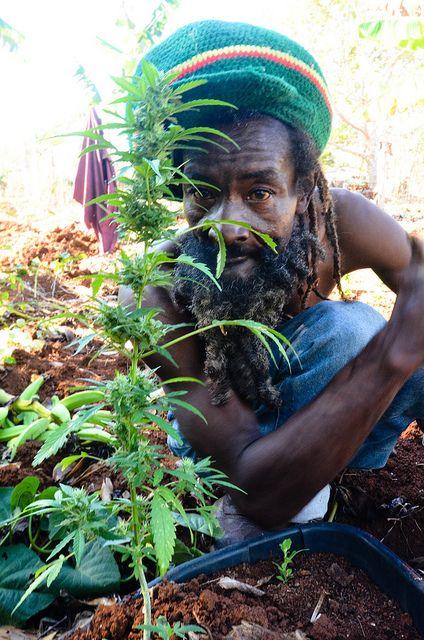 Jamaica Jahmaica #RASTA http://JamaicaGanja.com #domainname~ Yep this is part of the culture~