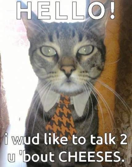Trendy funny cats memes laughing so hard hilarious dogs 39 ideas