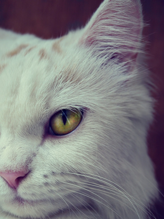 """A cat's eyes are windows enabling us to see into another world."""" --Irish Proverb"""