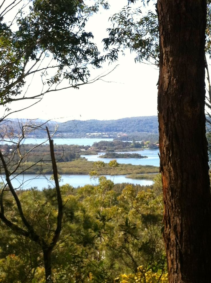 View of Brisbane Water on Daleys Point Fire Trail Walk