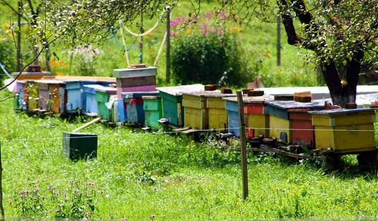 Best 25+ Bee hive plans ideas on Pinterest   Langstroth ...