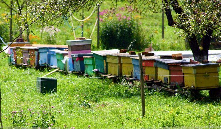 They look so nice :) #hives #bee #beehive #honeybee #beekeeping #beeinmybonnet  ===== SEARCH TERMS:  langstroth bee hives; types of beehives; honey bee hives for sale; bee hive comparison; flow beehive; bee hive boxes for sale; best beehive starter kit; bee box plans; honey bees sale; complete bee hives for sale; beehives for sale craigslist; bee hives for sale near me; used honey bee boxes for sale; honey bee box kit; commercial bee hives for sale; honey box manufacturers;