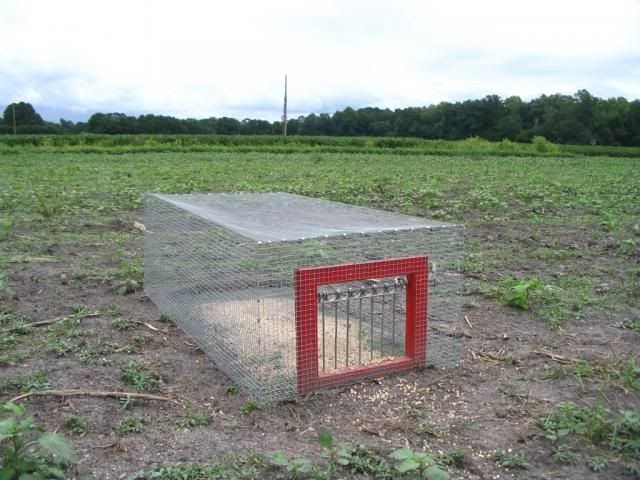 Pigeon Trap - BHM Forum- to catch birds for pointer training.