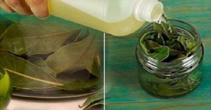 Príroda nám často ponúka bylinky, ktoré sú pri liečbe rôznych ochorení účinnejšie než mnohé klasické lieky. Jednou z nich je aj tento list.