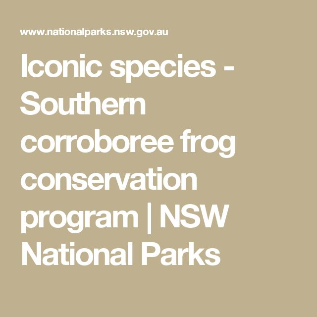 Iconic species - Southern corroboree frog conservation program | NSW National Parks