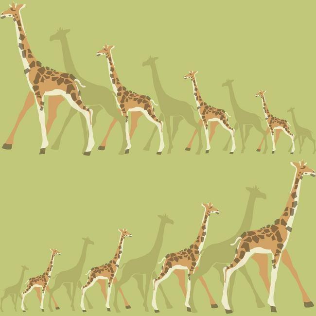 Dwell Studio Baby And Kids Giraffes Multicolor Wallpaper York Wallcoverings  Wallpaper