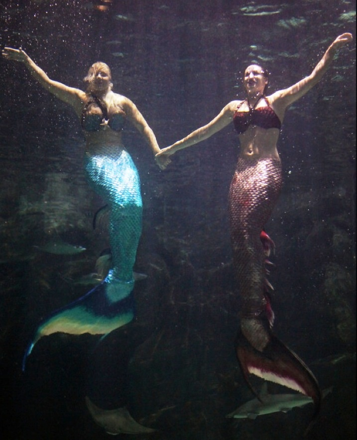 Mermaid Team A Rare Photo Of Not One But Two Mermaids Together In The Water Live From Myrtle Beach Mania Real Life