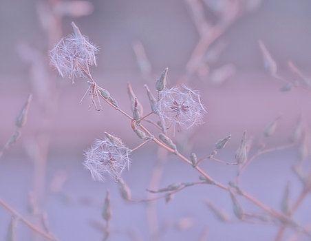 Pink morning by Natalya Antropova #NataliaAntropovaArtPhotographer#flower #HomeDecor#Pink