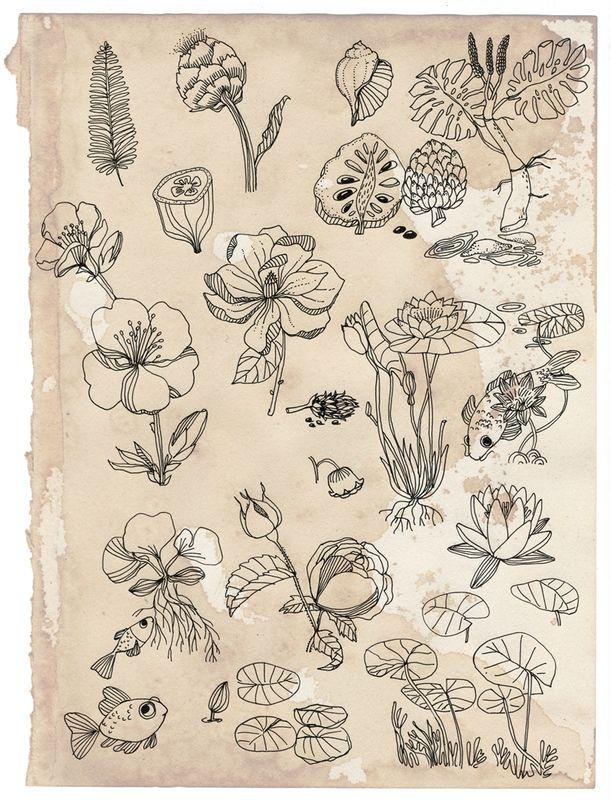 recherches botaniques, Cécile Hudrisier