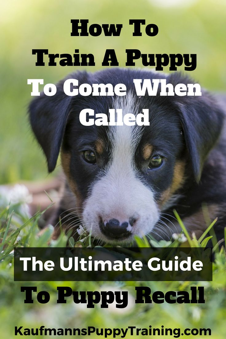 best Puppy Love images on Pinterest  Dog stuff Animales and