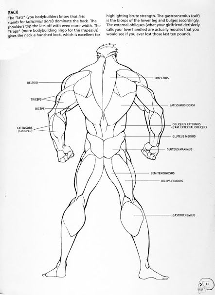 Male Back Anatomy