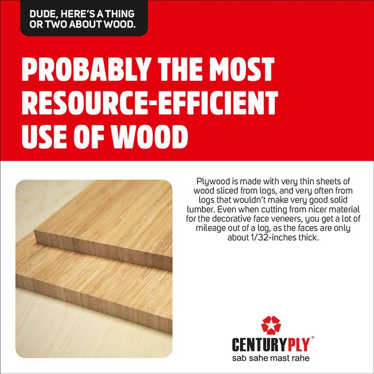 Facts You Wouldn T Know About Wood Centuryply Didyouknow Sabsahemastrahe Click Http Bit Ly 1pkjzxw Wood Slices Veneers Wood