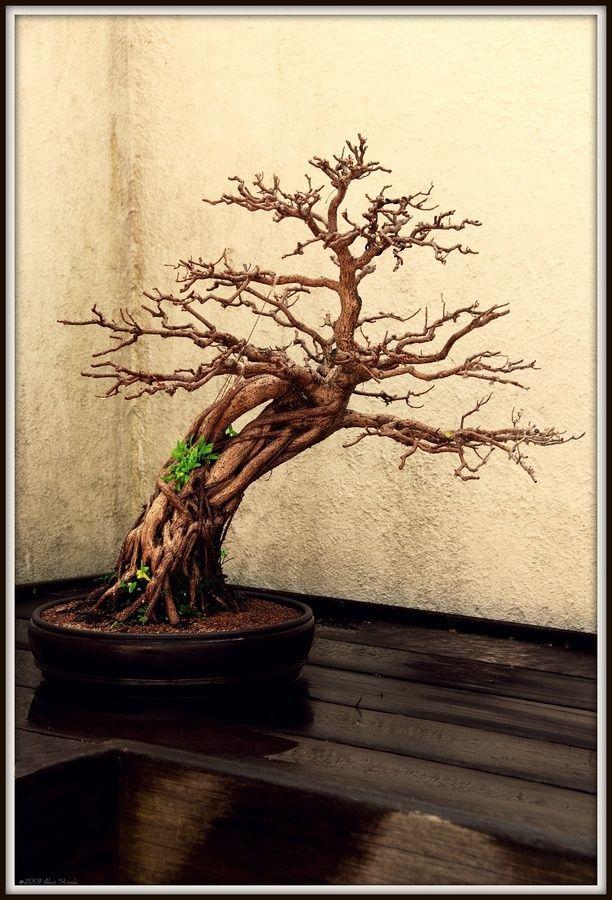 1000 ideas about bonsai tattoo on pinterest bonsai geometric tattoos and bonsai trees. Black Bedroom Furniture Sets. Home Design Ideas