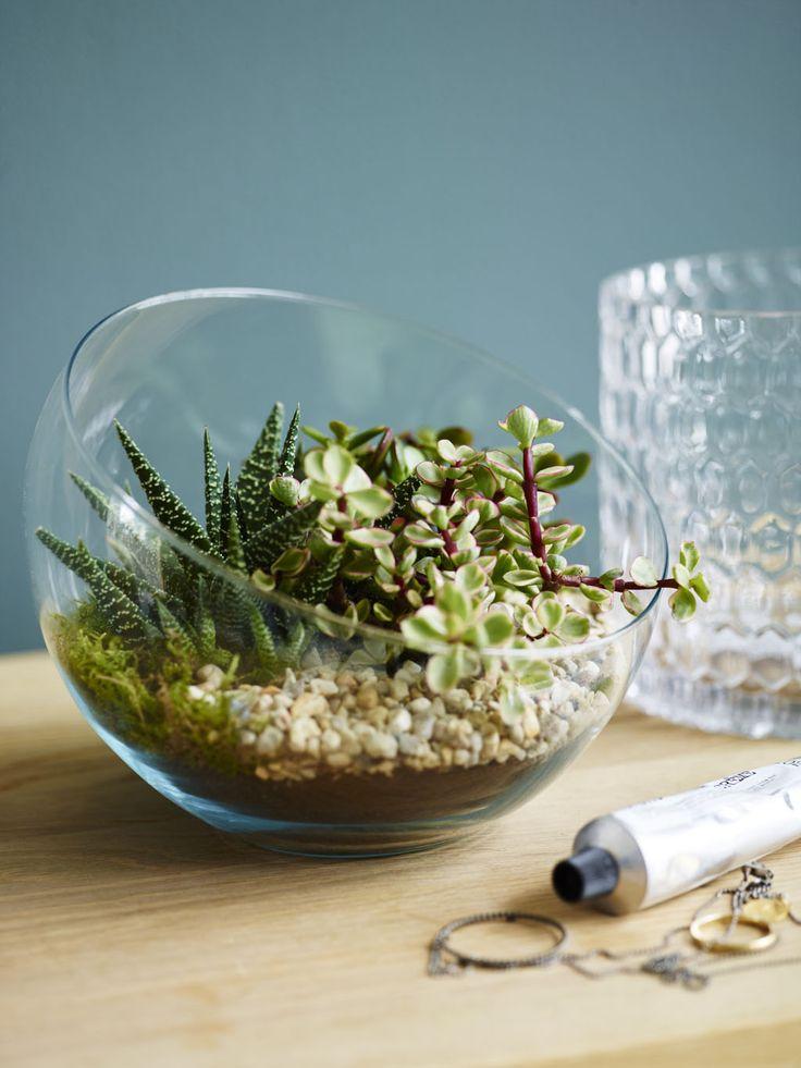 Stilig med sukkulenter og kaktuser i terrarium.