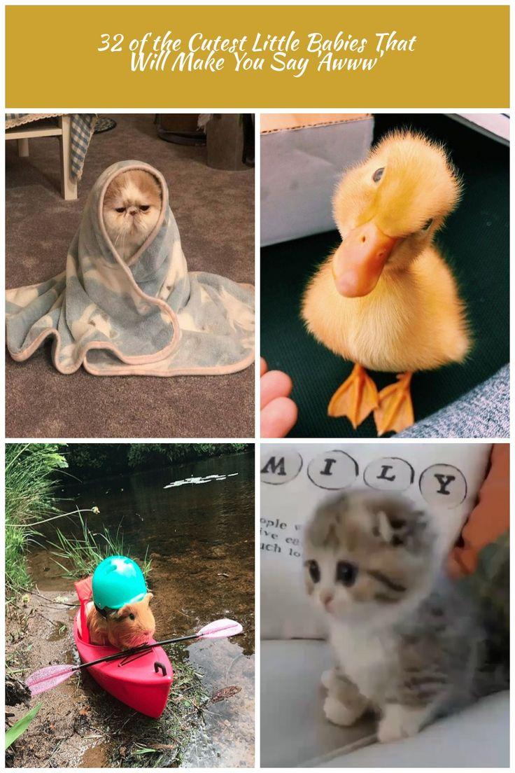 #tier #süßeste #erde #fotos #bewährte 100 Fotos, die beweisen, dass Katzen die besten sind …   – schwangerschaft-bekanntgabe