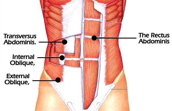 We usually miss oblique exercise which is reason for delay development of abs. Oblique abs workout....Follow few best internal oblique workout, external
