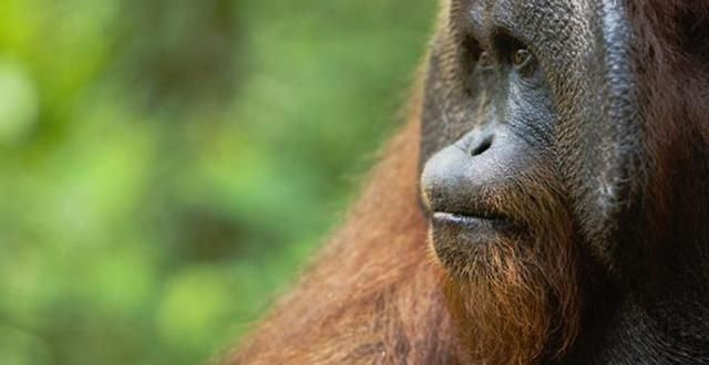 TakePart | Don't Let Your Shampoo and French Fries Destroy Tropical Forests