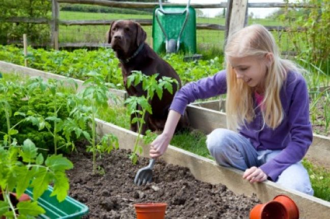 """How to compost at home... """" Not only does it fertilize and condition the soil with high levels of nutrients, but it also aids with erosion control and pest management. By reducing the need for chemical fertilizer inputs and recycling household waste, you'll also be saving money and benefiting the environment..."""""""