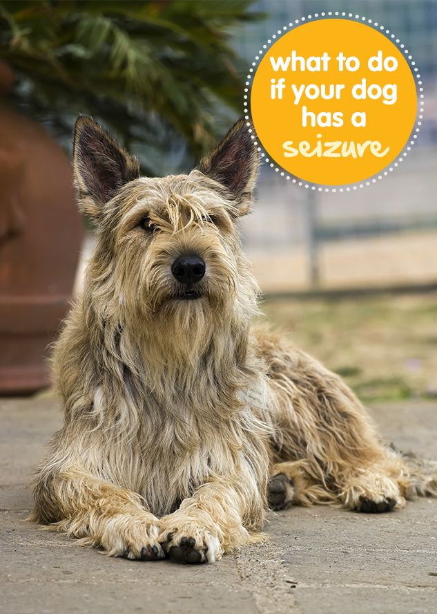 How To Speak And Understand Your Berger Picards Hidden Language Fun and Fascinating Guide to The Inner World of Dogs