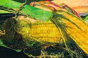 "New artwork for sale! - "" Corn On The Cob Corn Corn Hair  by PixBreak Art "" - http://ift.tt/2mKfckx"