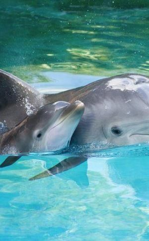 dolphins  Deana's passionnwww.adealwithGodbook.com